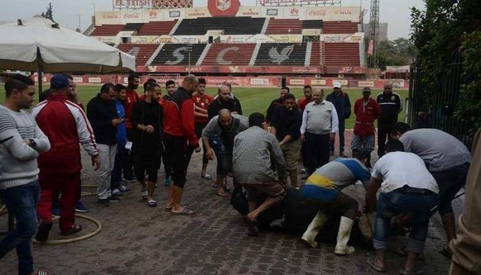 Египетский Аль-Ахли зарезал быка, чтобы прервать неудачную серию