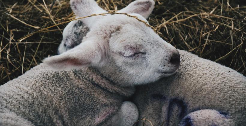 Стрибайте через коня вдень, аби не рахувати овець вночі