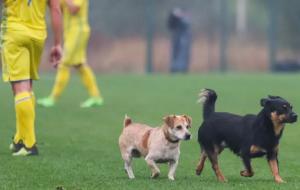 Собаки і кінь ледь не зірвали матч збірних України та Італії серед глухих (відео)