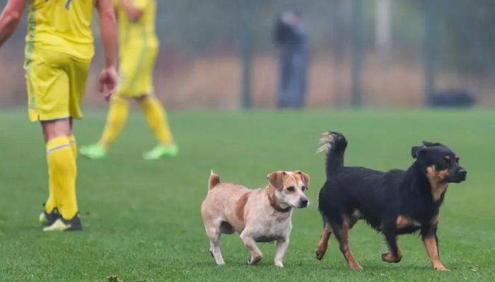 Собаки и конь едва не сорвали матч сборных Украины и Италии среди глухих (видео)